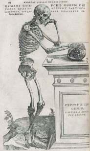 Imatge extreta del De Humani Corporis Fabrica, digitalitzat per la National Library of Medicine